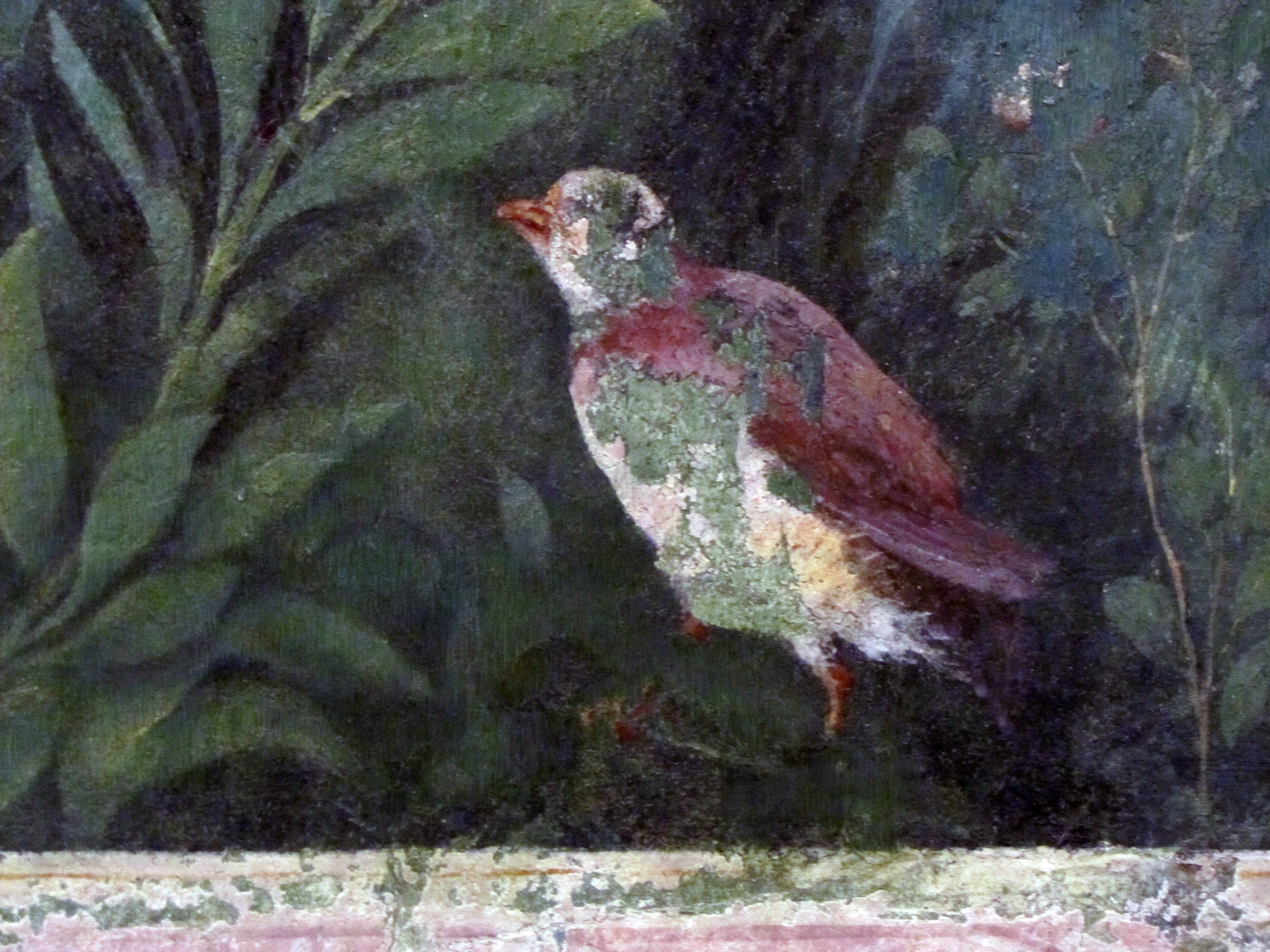 Partridge/Pheasant