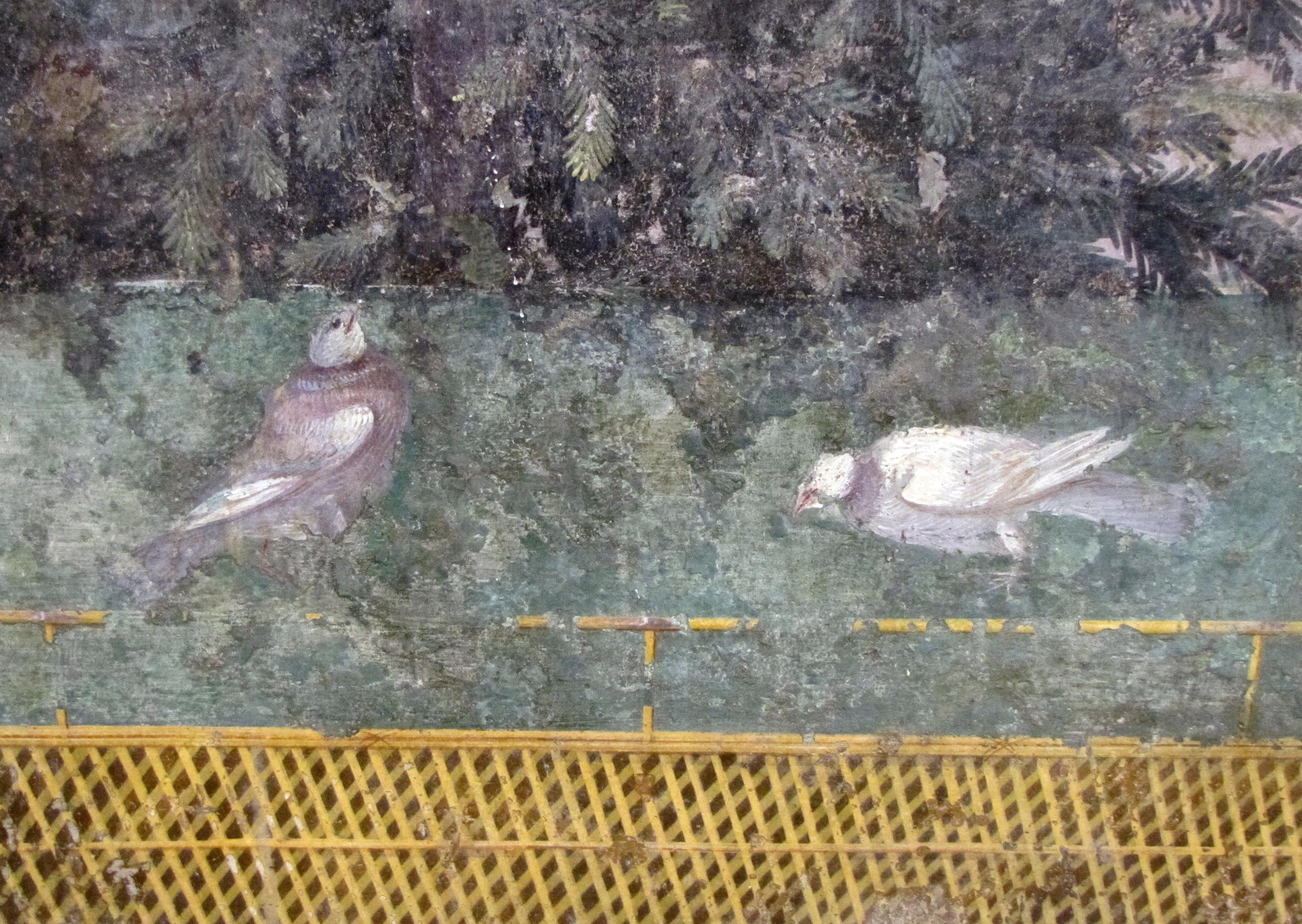 Wood Pigeon or Rockdove