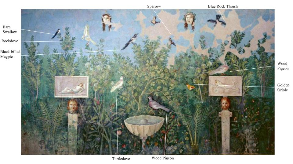 Roman Birds