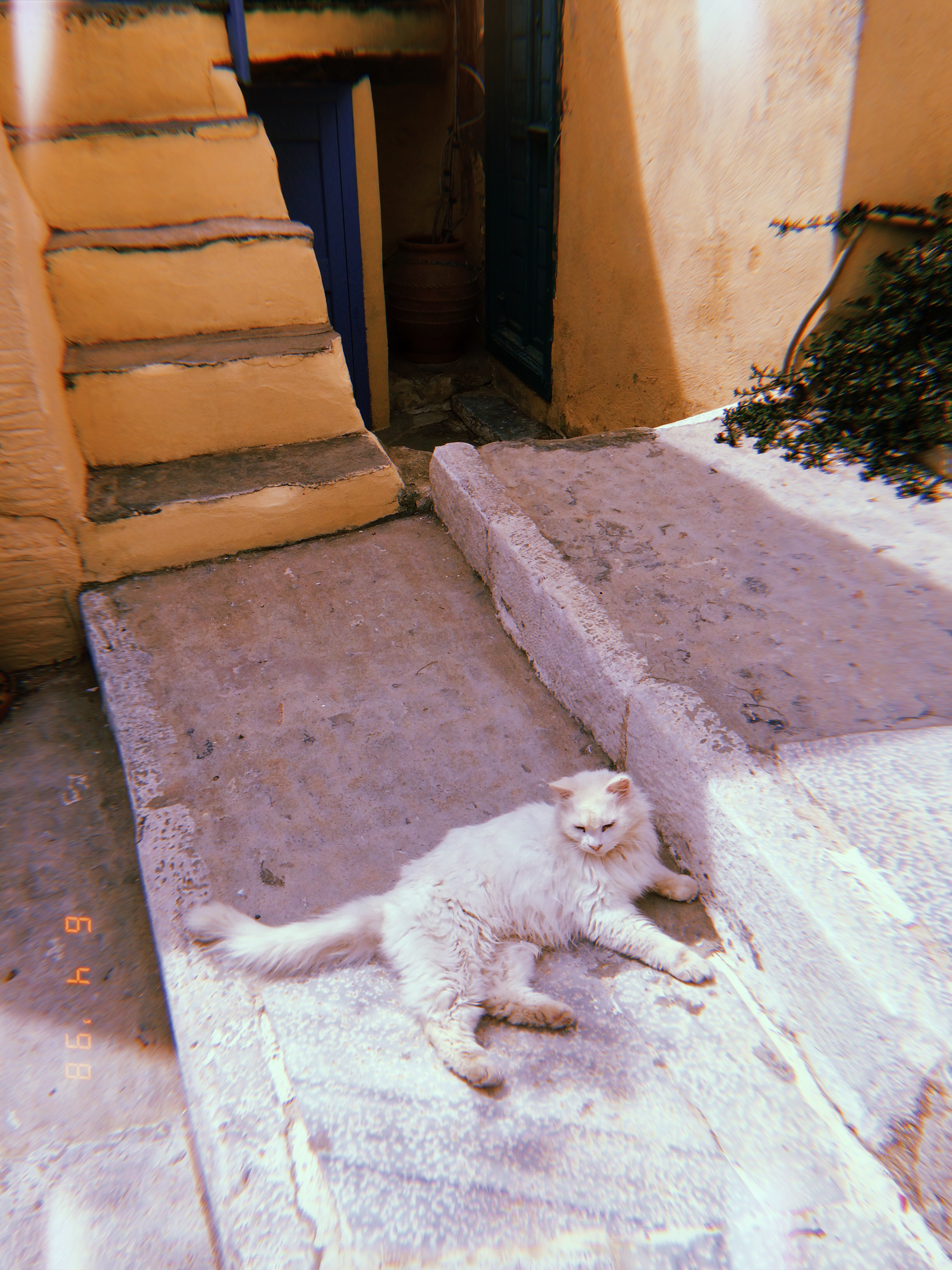 Syros kitty